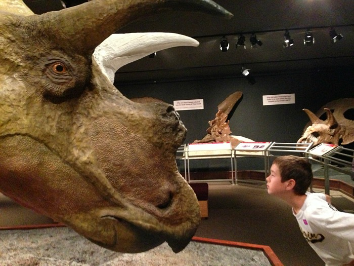 museum of the rockies boy vs triceratops