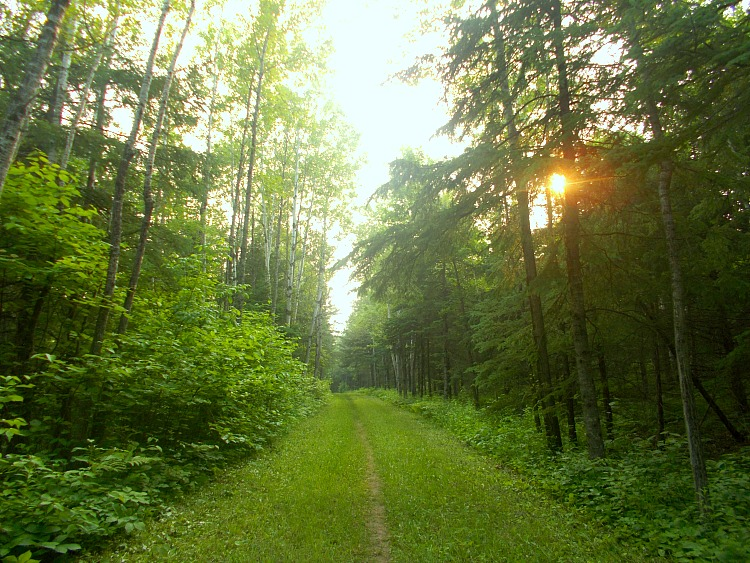 Jay Cooke State Park trail