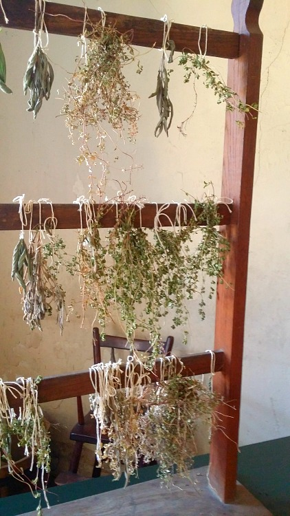Dried Herbs at Fort Snelling